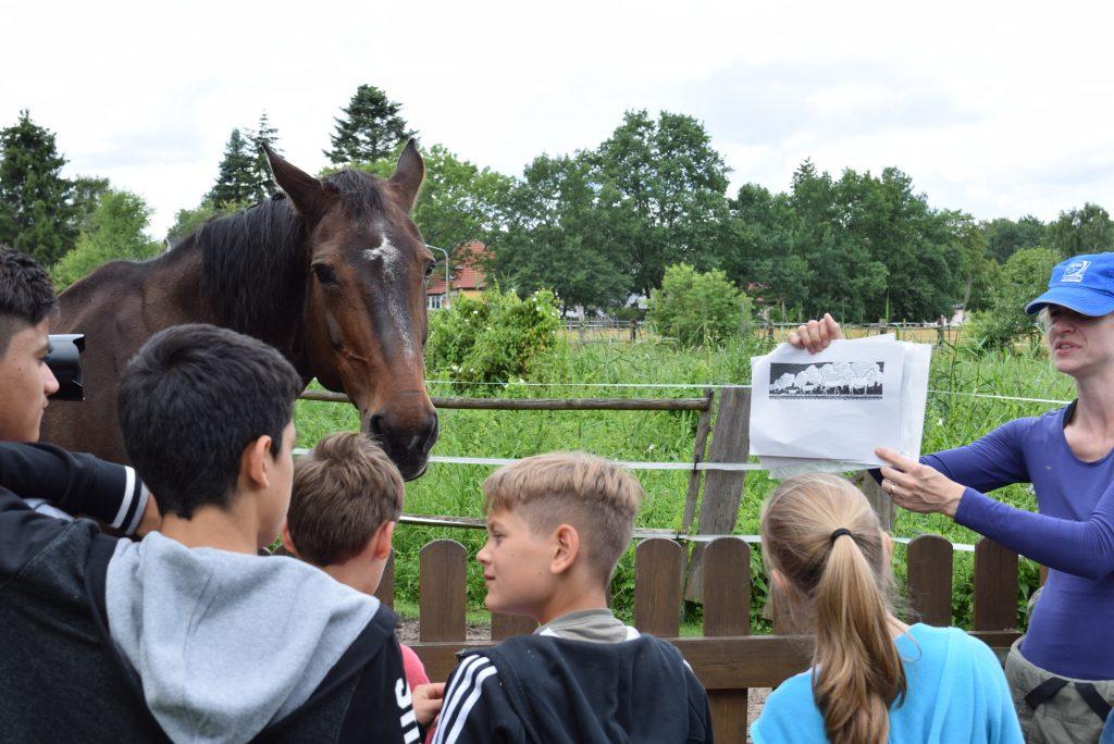 Mit den Augen lenken: Kinder lernen die Sprache der Pferde zu sprechen